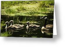 One Honk Says It All Greeting Card by Thomas Young