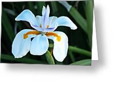 One Irisen Greeting Card