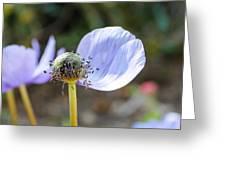 One Last Petal Greeting Card by Hannah Miller