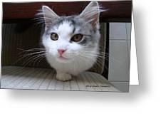 One Legged Kitty Greeting Card