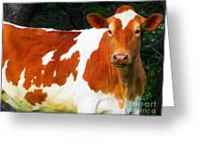 One Lovely Guernsey Greeting Card by Tina M Wenger