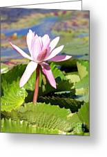 One Pink Water Lily Greeting Card