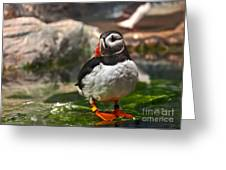One Puffin Bird Art Prints Greeting Card