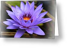 One Purple Water Lily With Vignette Greeting Card