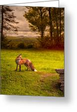 One Red Fox Greeting Card