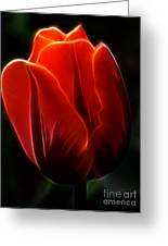 One Red Tulip Greeting Card