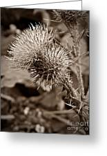 One Sepia Greeting Card