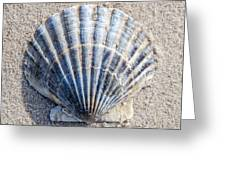 One Shell Greeting Card