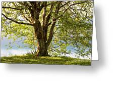One Spring Tree Greeting Card