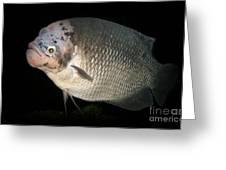 One Strange Fish Greeting Card