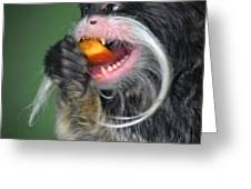 One Very Hungy Emperor Tamarin Monkey Greeting Card