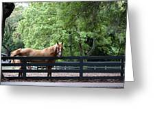 One Very Pretty Hilton Head Island Horse Greeting Card