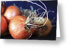 Onion Roots Greeting Card