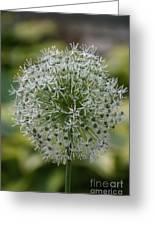 Onion Seeds Greeting Card