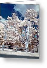 Ontario Summer Color Infrared Greeting Card