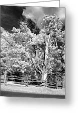 Ontario Summer Infrared Greeting Card