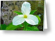 Ontario Trillium Greeting Card