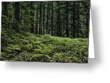 Opal Creek Wilderness Greeting Card