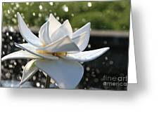 Opaque Lily Greeting Card