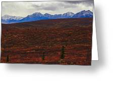 Open And Wild Greeting Card