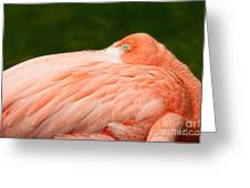 Flamingo With An Open Eye Greeting Card