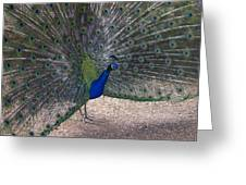 Open Feathers Greeting Card