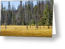 Open Meadow Glacier National Park Greeting Card