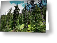 Open Subalpine Forest Greeting Card