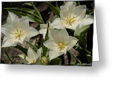 Open Tulip Time Greeting Card