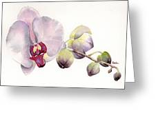 Open Up Greeting Card