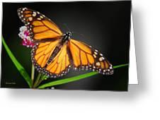Open Wings Monarch Butterfly Greeting Card