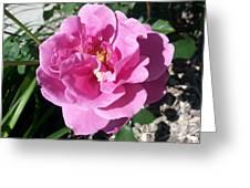 Opera Pink Frills Greeting Card