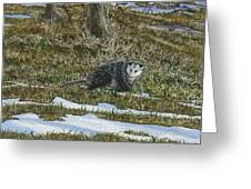 Opossum  Greeting Card