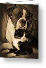 Opposites Attract Greeting Card by DigiArt Diaries by Vicky B Fuller