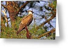 Opulent Osprey Greeting Card