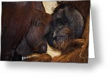 Orangatang Love Greeting Card