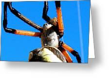 Orange And Black Spider Legs Greeting Card