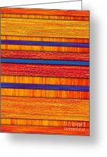 Orange And Blueberry Bars Greeting Card by David K Small