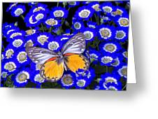 Orange And Gray Butterfly Greeting Card