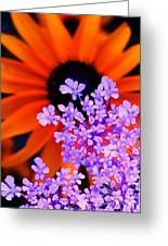 Orange And Lavender Greeting Card