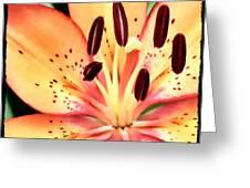 Orange And Pink Flower Greeting Card