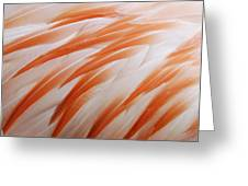 Orange And White Feathers Of A Flamingo Greeting Card