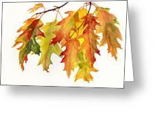 Orange And Yellow Oak Leaves Greeting Card