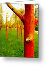 Orange And Yellow Trees Greeting Card
