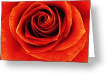 Orange Apricot Rose Macro With Oil Painting Effect Greeting Card