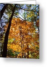 Orange Autumn II Greeting Card