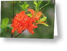 Orange Azalea At Moore State Park Greeting Card