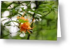 Orange Azalea Delight Greeting Card