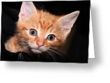 Orange Baby Greeting Card