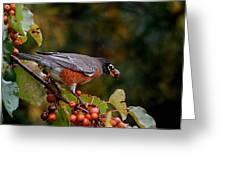 Robin's Orange Buffet Greeting Card